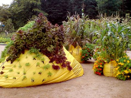 Garbage bags as vegetable gardens Pretty darn clever actually