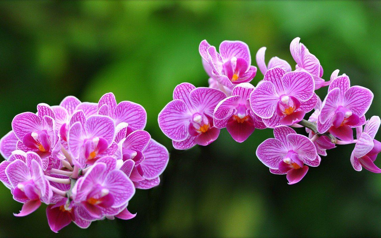 Мая, картинки цветы красивые орхидеи