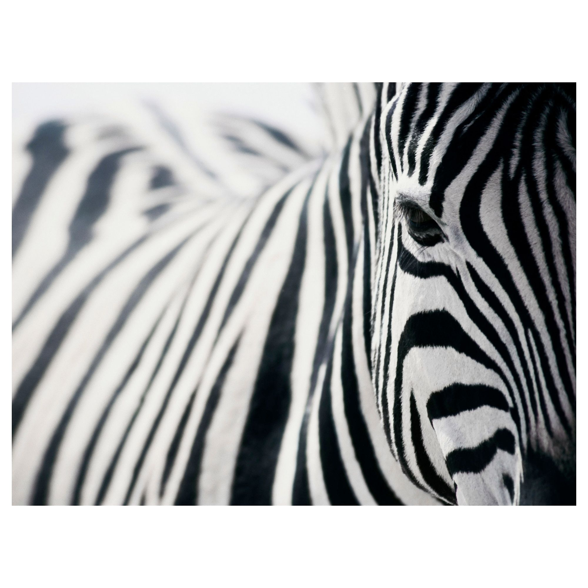Zebra Wall Art pjätteryd | room, bedrooms and walls