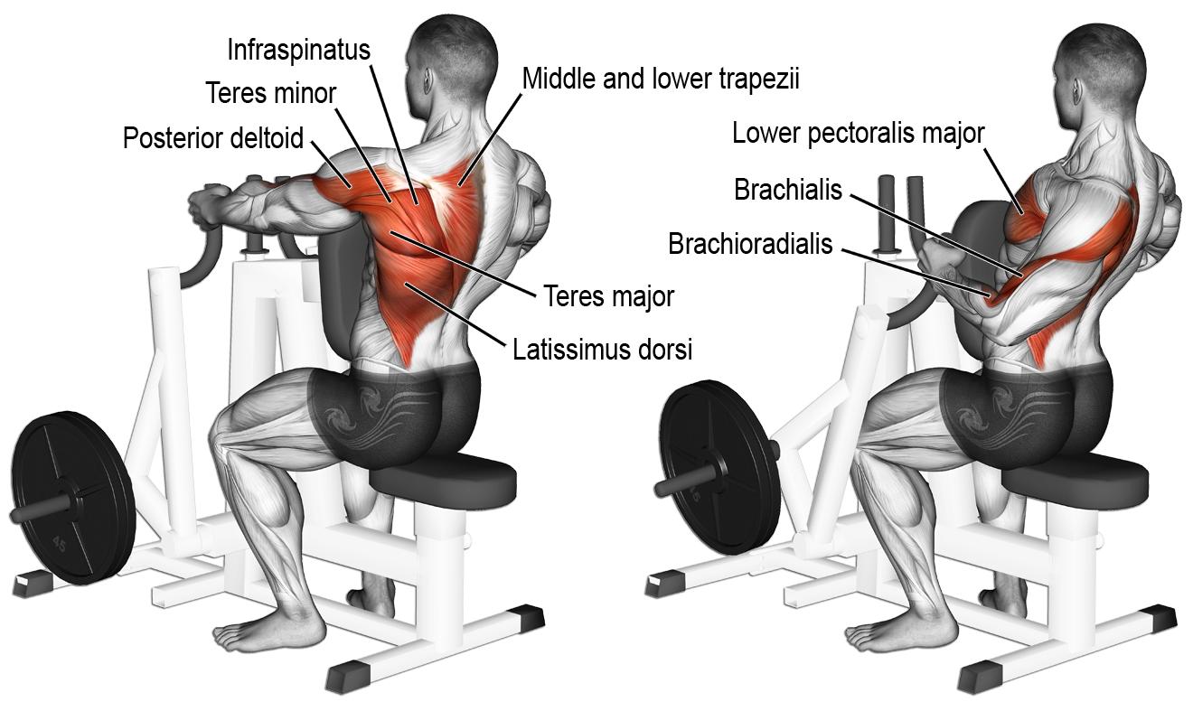 comment effectuer le rowing la machine anatomie musculation dos pinterest. Black Bedroom Furniture Sets. Home Design Ideas