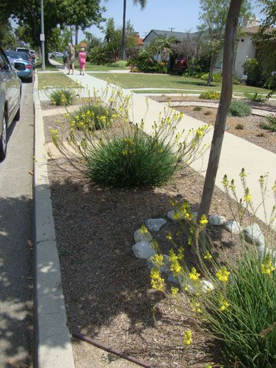 drought resistant plants parkways