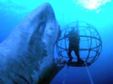 Real Megalodon Found Alive World S Biggest Great White Shark Ever Caught On Tape Dailymotion