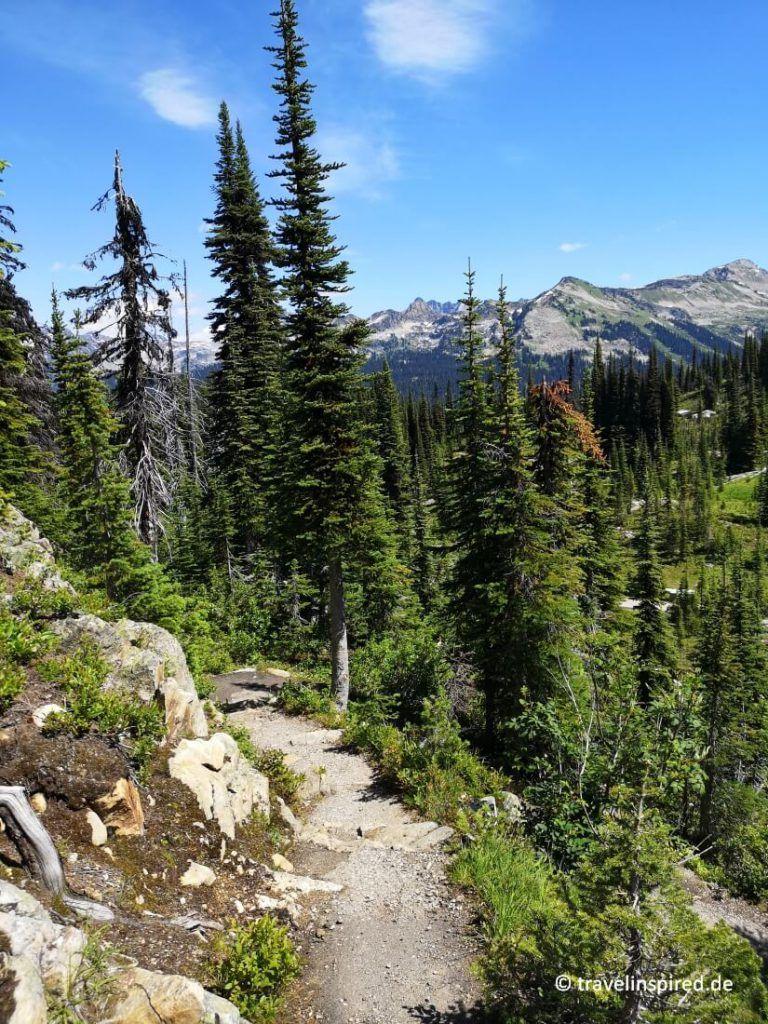 Mount Revelstoke Nationalpark: Wandern & Tipps   Travelinspired