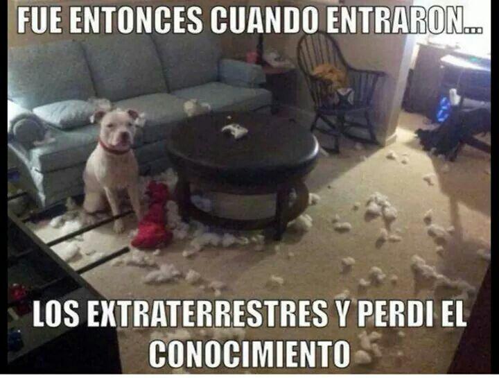 Exploto El Sillon Perros Frases Perros Graciosos Humor De Perros