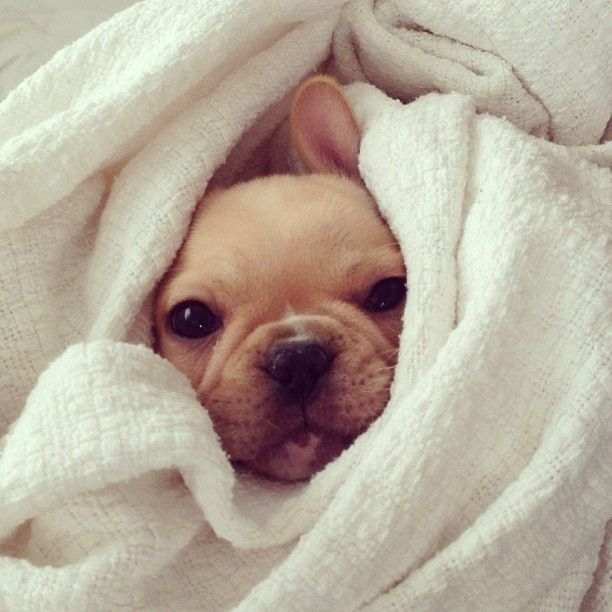 It Can T Be Time To Get Up Already Cute Baby Animals Baby