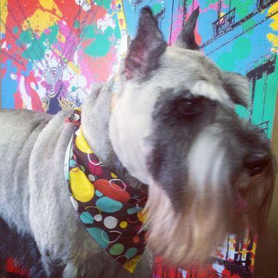 Shelby S Pet Styles Dog Groomer Dog Grooming Cat Groomer