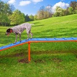 Walk The Plank Southern Recreation Dog Agility Course Agility