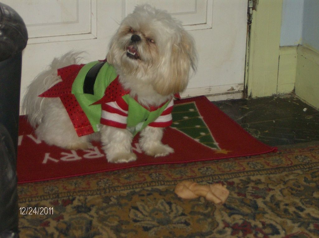 Lost Dog Shih Tzu Covington Ga United States 30014 Lost