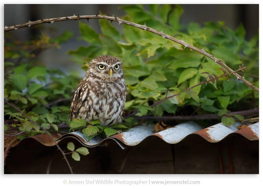 Barn Owl Centre (@BarnOwlCentre) on Twitter | Barn owl ...
