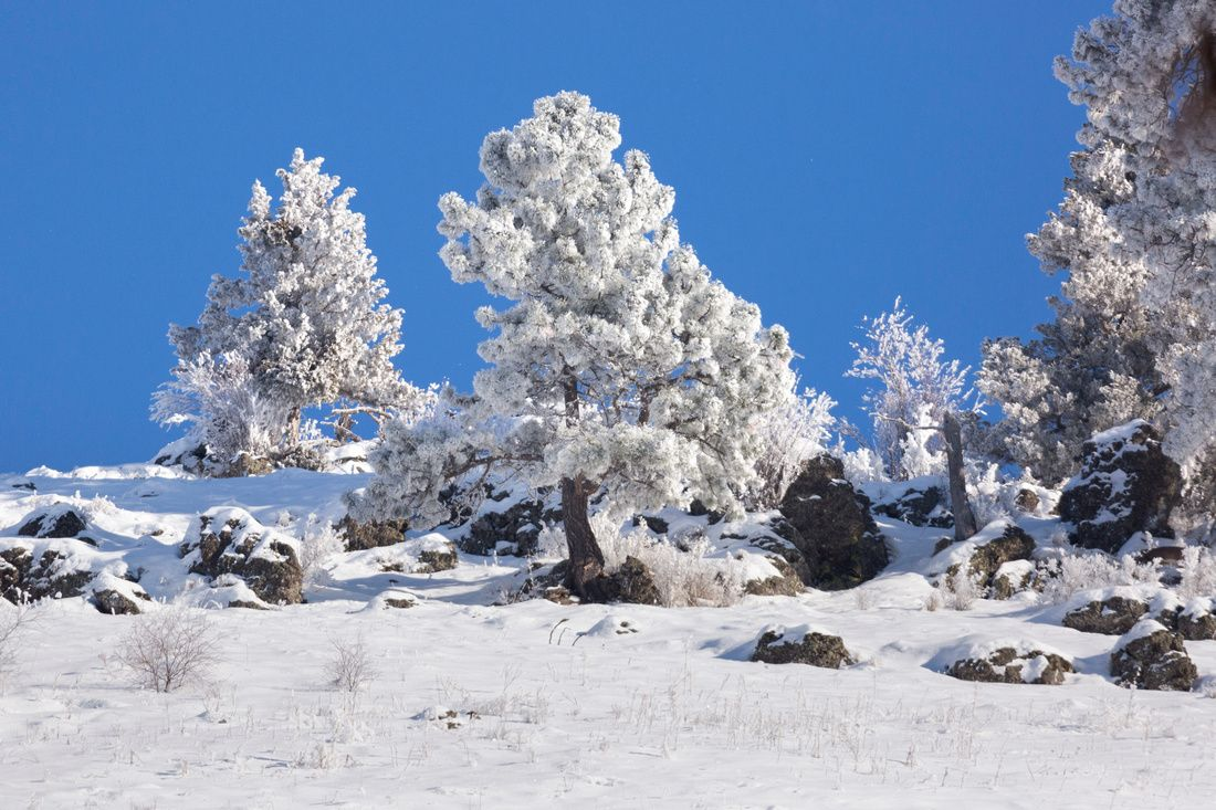 Winter In The Blue Mountains Winter Scenes Landscape Photography Landscape Photos