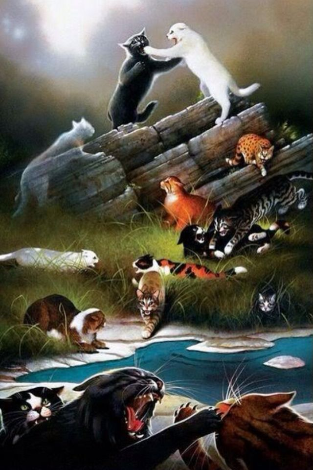The Battle Between Thunderclan And Riverclan Over Prey Rocks