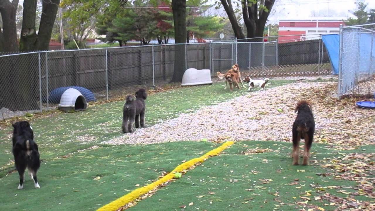 Around the Yard Dog daycare, Animal hospital, Veterinary