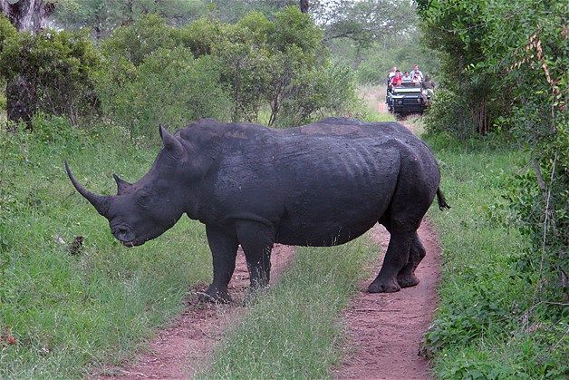 Pin By Aunt Du On 4 Legged Furry Or Feathered Rhino Poaching