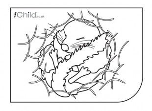 Great Site For Printable Coloring Pages Coloring Pages Dormouse