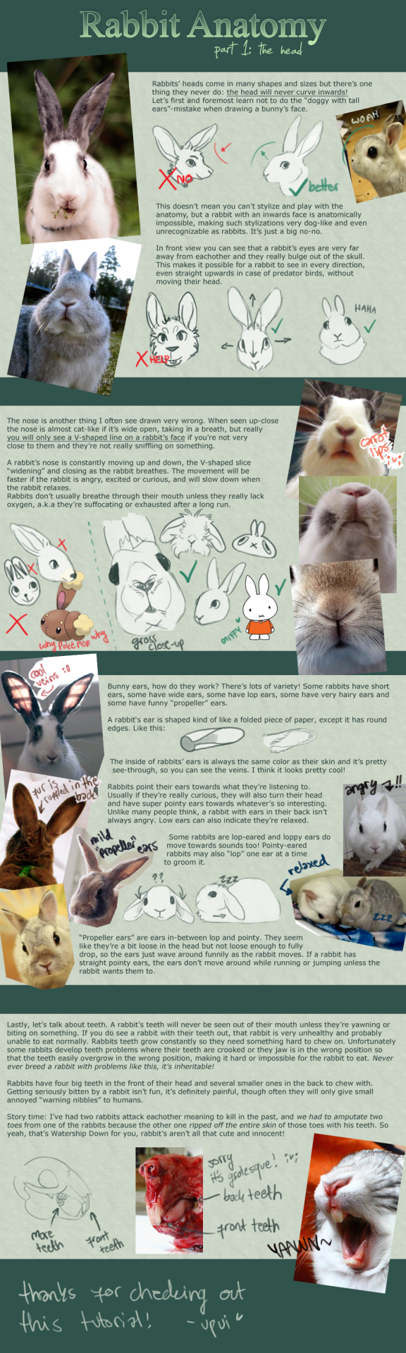 Rabbit Anatomy / Part 1: the head by upuiSee artist\'s comment for ...