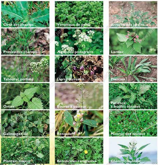 voici comment vous pouvez vous d 233 barrasser des mauvaises herbes