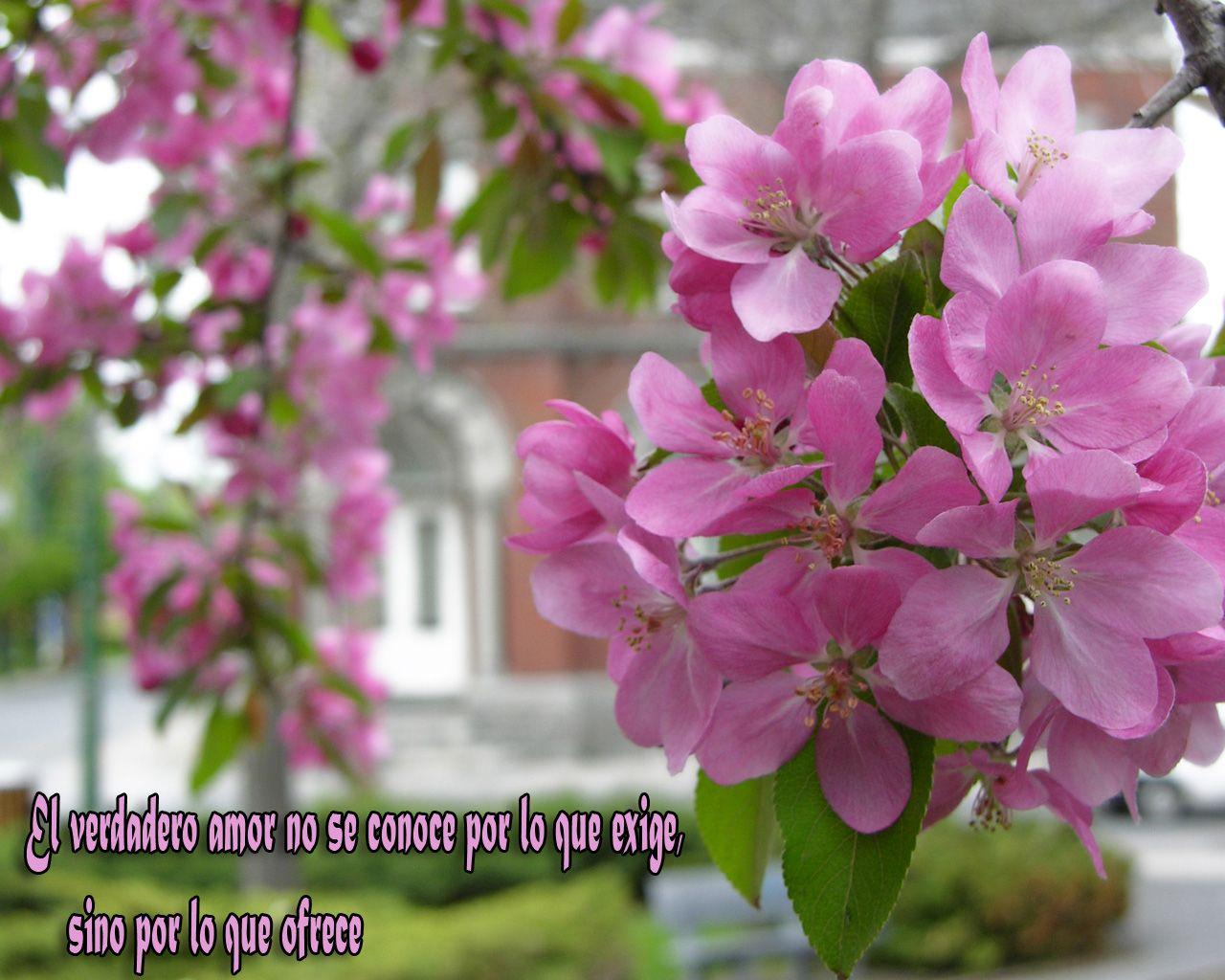Tarjetas De Cumpleaños Con Flores Para Mandar Por