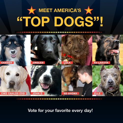 Vote For Your Favorite Everyday Dog Meet Therapy Dogs Dogs