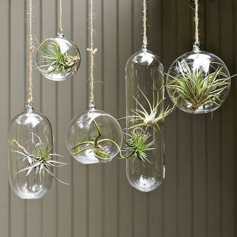 I am kind of obsessed with these air plants currently. love the long oblong one or the large round bubble... seems like they'd need to be hung in a group of three or five. <3