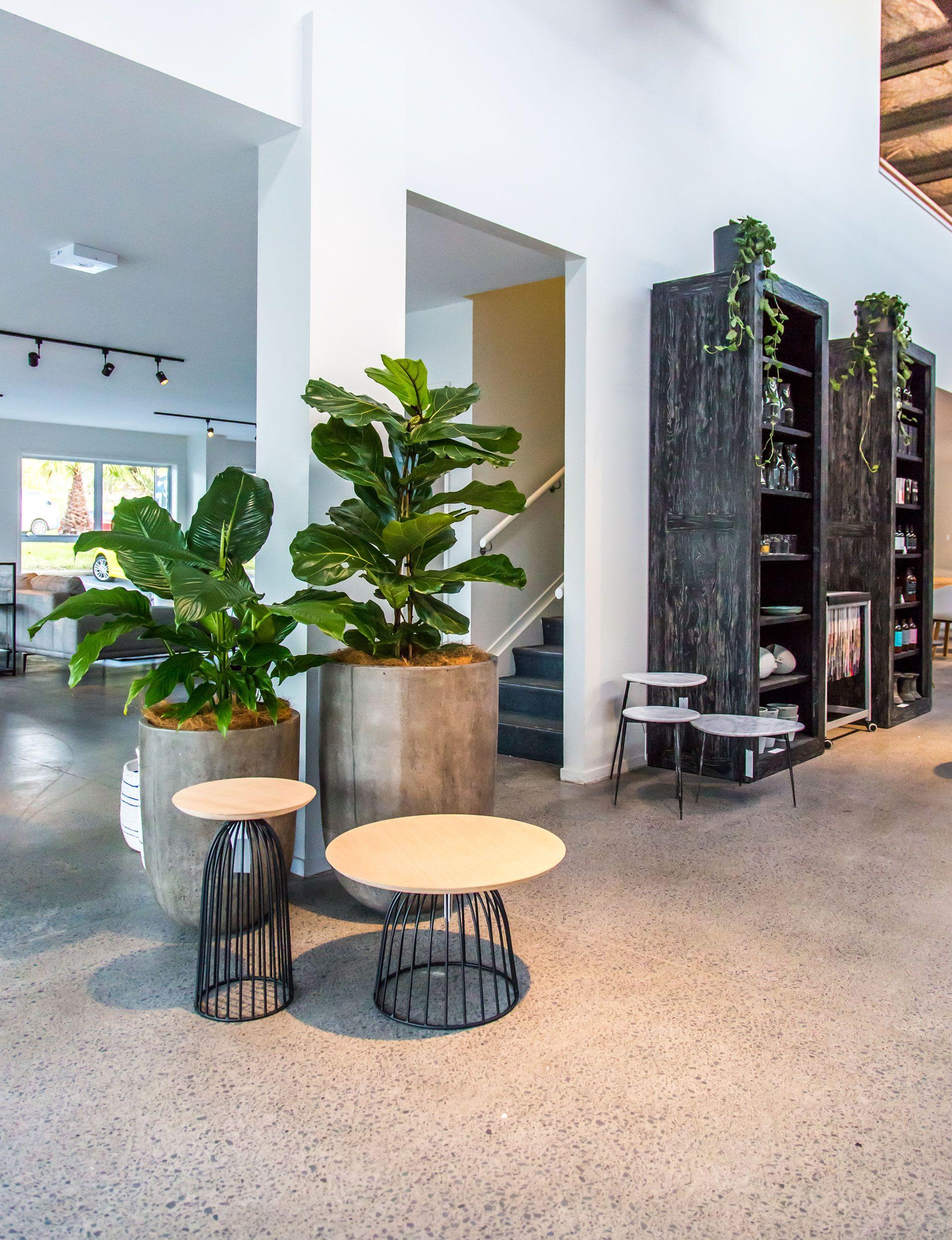 Sorgfältig Ausgewählt Und Positioniert Indoor Pflanzen Lässt Sich Fabelhaft  Interesse Und Textur. Wir Runden