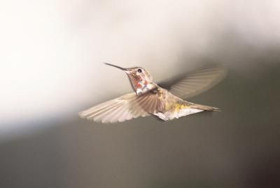 When To Put Out Hummingbird Feeders Hunker Humming Bird Feeders Butterfly Feeder Lobelia Flowers