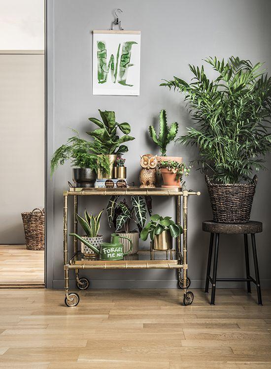 Kaktusar är tåliga och lättskötta Boho Home Decor Pinterest - decoracion de interiores con plantas