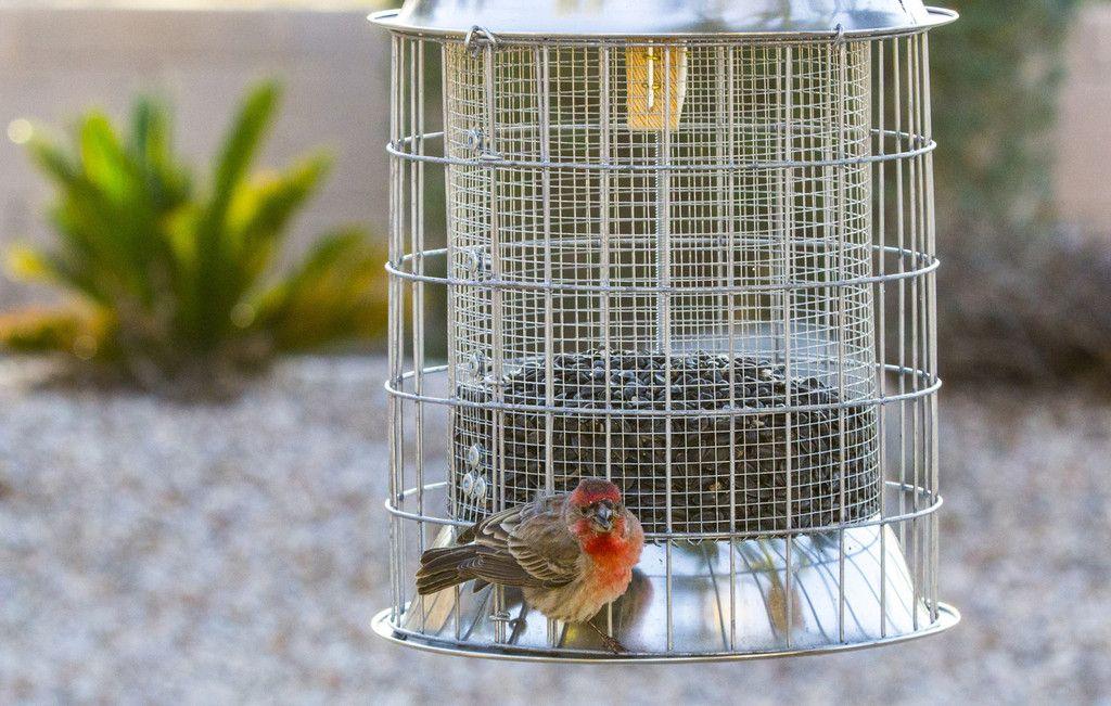 how to squirrel proof a window bird feeder
