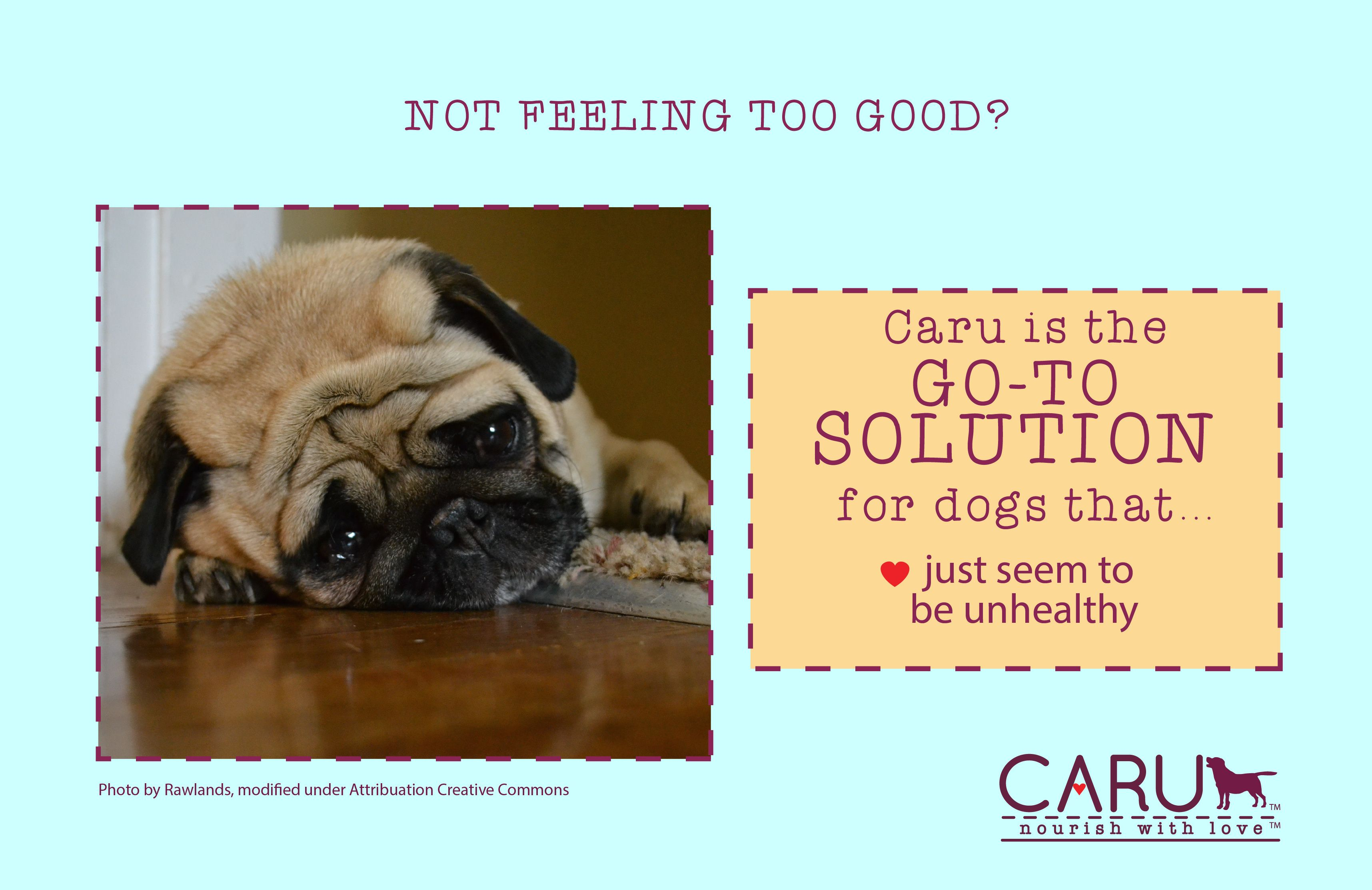 Pup Not Feeling Too Good Caru Is The Go Tosolution For Dogs That Just Seem Unhealthy Food Animals Dogs Unhealthy