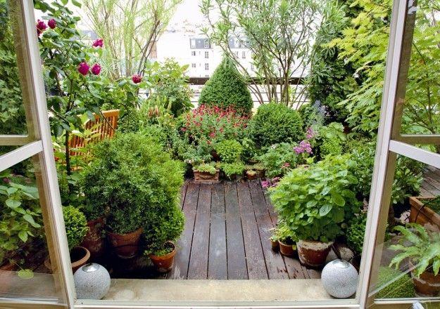 Risultati immagini per piante per terrazzo   kleine Balkone ...