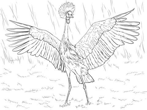 Grulla Coronada Cuellinegra Africana Dibujo para colorear | pájaros ...