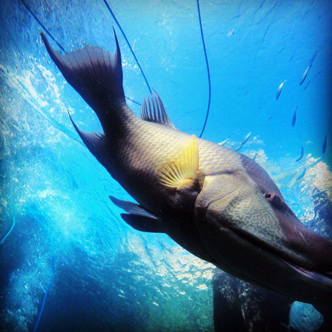 Bob Fish Underwater Photography Underwater Photography Fish Pet Animals
