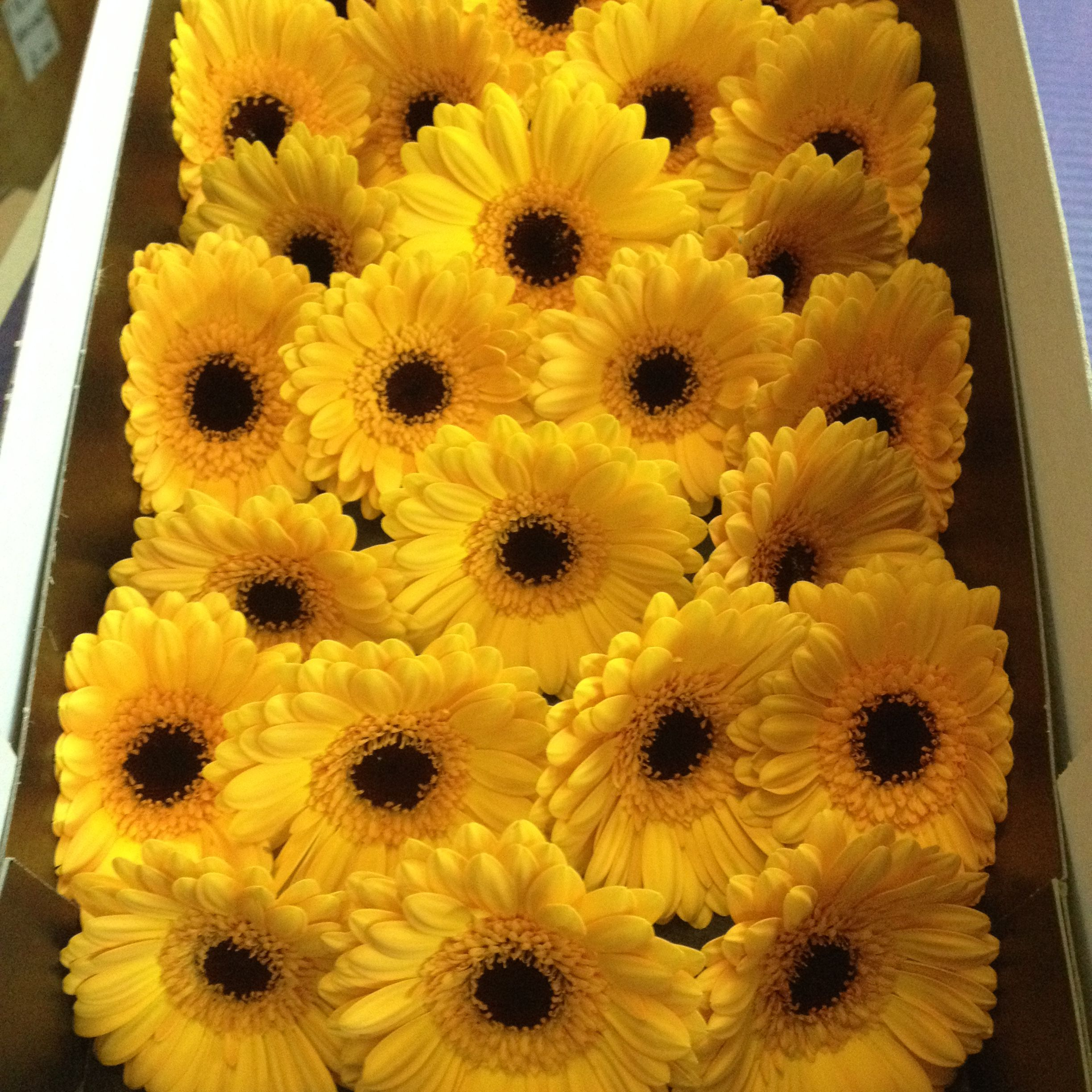 Wholesale Fresh Flowers for DIY weddings and events
