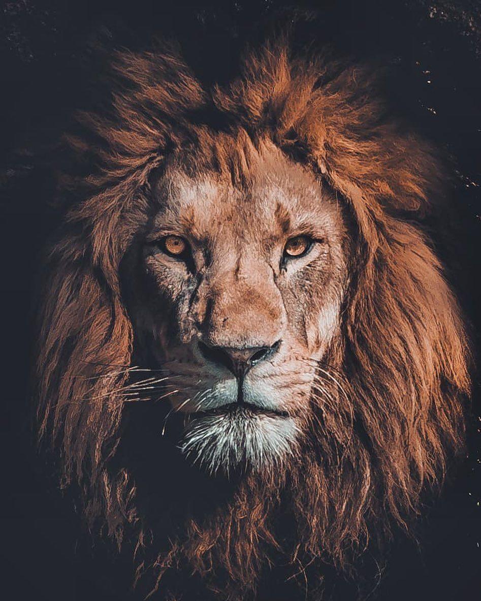 выходе найдите льва на картинке солоневич странице