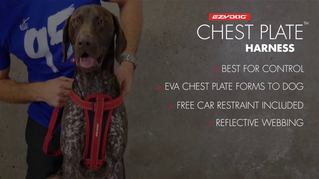 How To Fit A Dog Harness Ezydog Chest Plate Harness Dog
