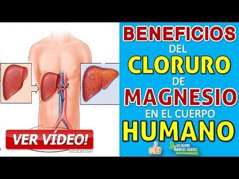 cloruro de magnesio gestation que sirve linear unit el ser humano