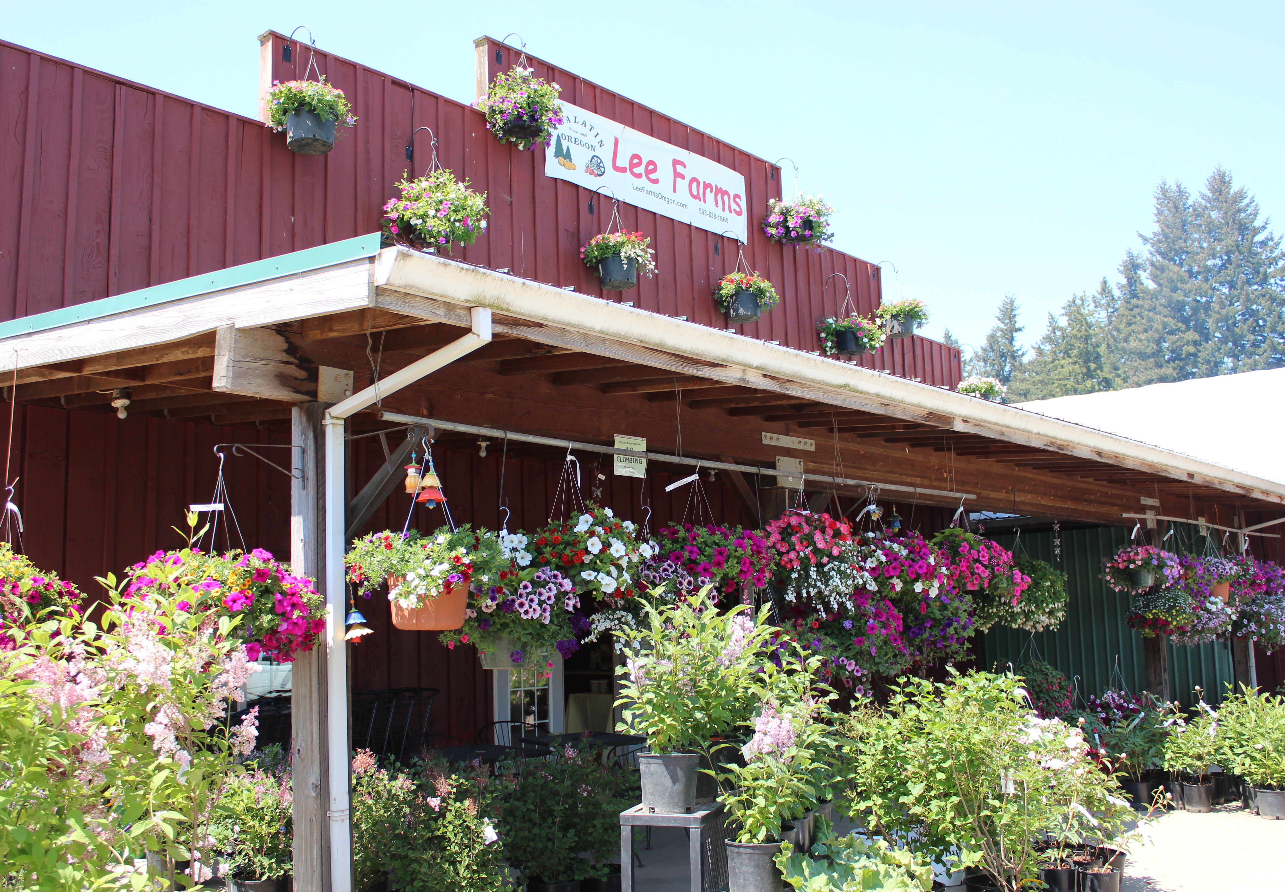 Lee Farms In Tualatin Oregon They Have The Best U Pick Strawberries I Have Ever Tasted Oregon Travel Best Places To Live Tualatin Oregon