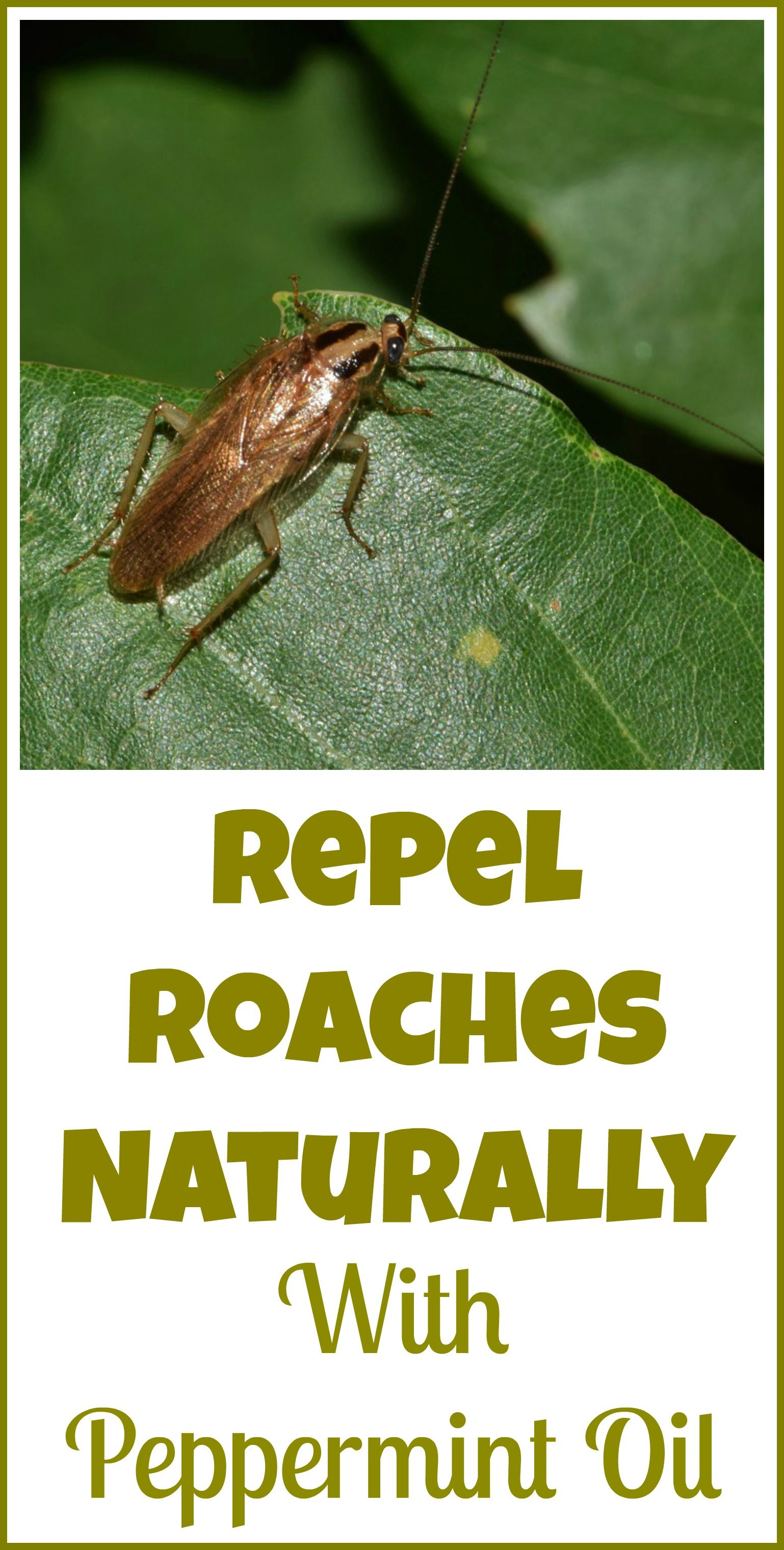 A good remedy for cockroaches, or How to get rid of annoying neighbors