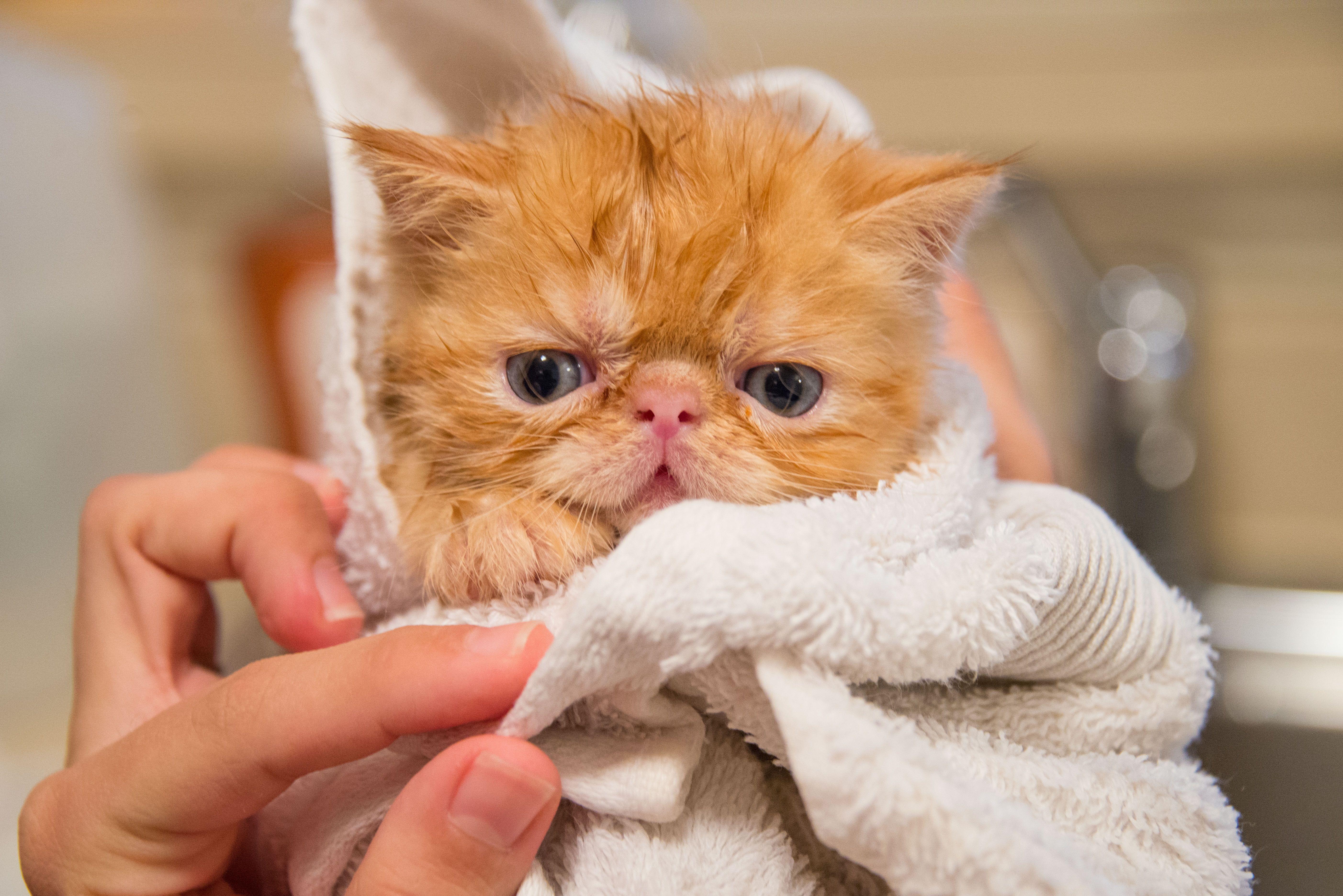 Pin On Allerpet Cat Dander Remover