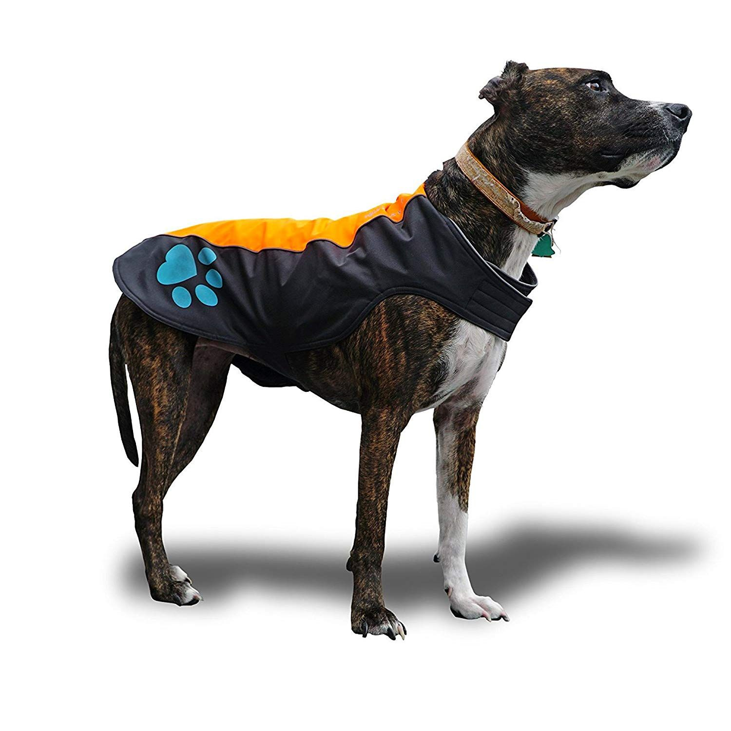 Safetypup Xd Dog Rain Vest Waterproof Dog Jacket For Large And Small Dogs Hi Visibility Reflective Vest With Fleece L Dog Jacket Small Dogs Reflective Vest [ 1500 x 1500 Pixel ]