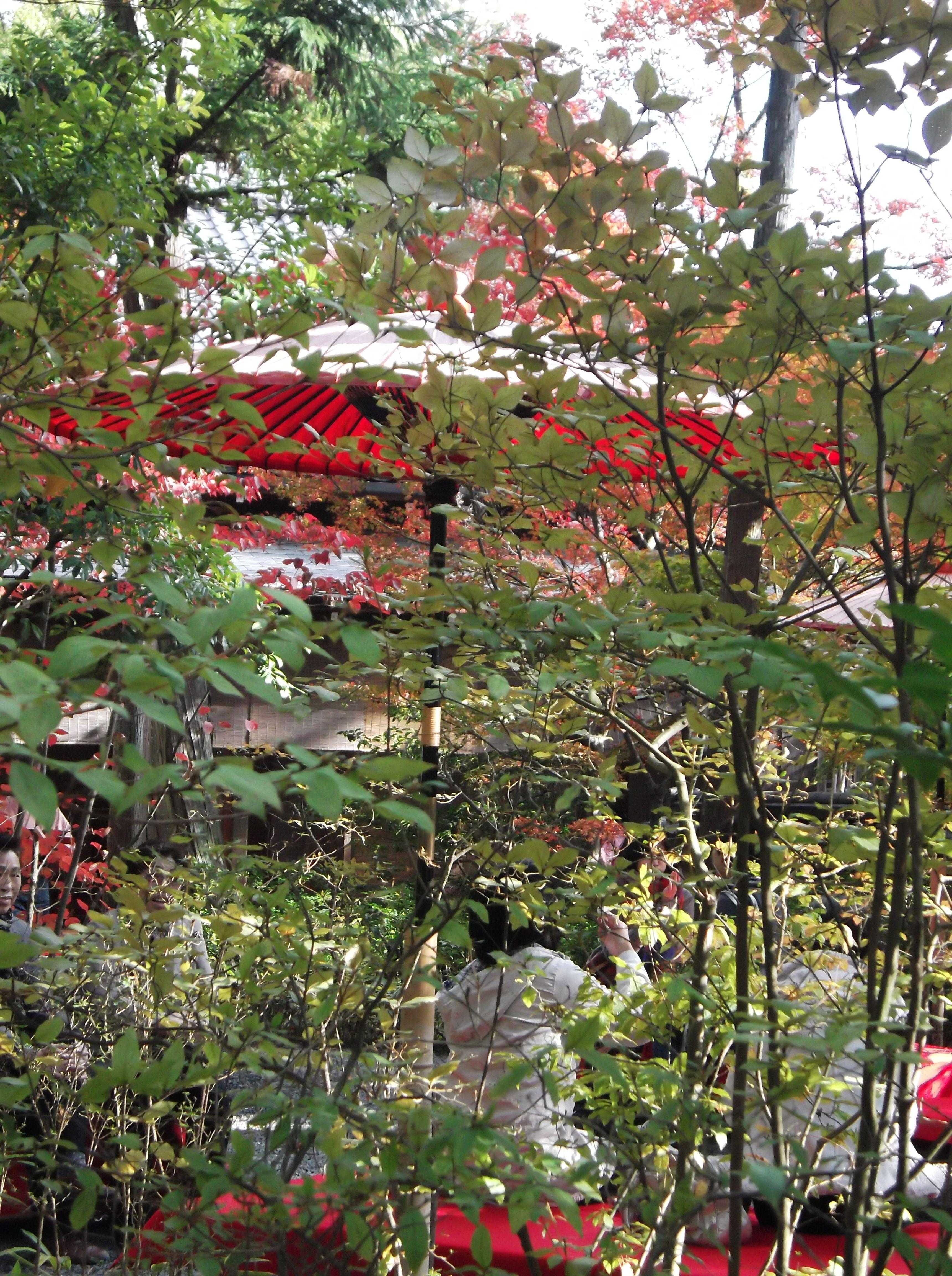 Glimpse of Parasol in Japanese Tea Garden, Kyoto | Japanese Gardens ...