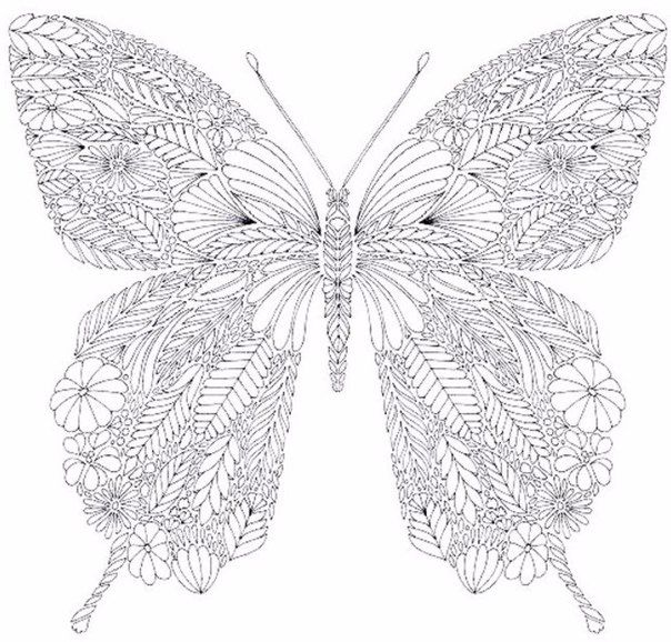 Wall | VK | Butterfly coloring page, Coloring books ...