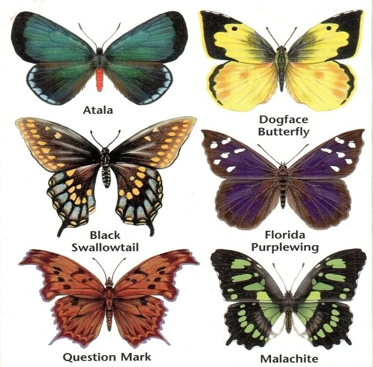 Butterflyinfo1 764x753 Jpg 764 753 Painting Drawing Animals