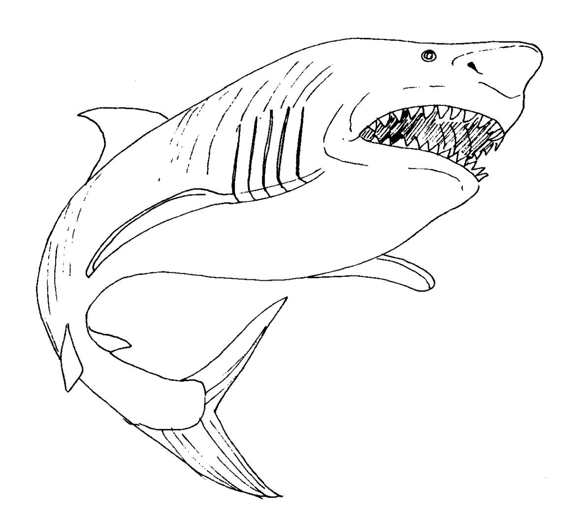 great white shark coloring page # 6