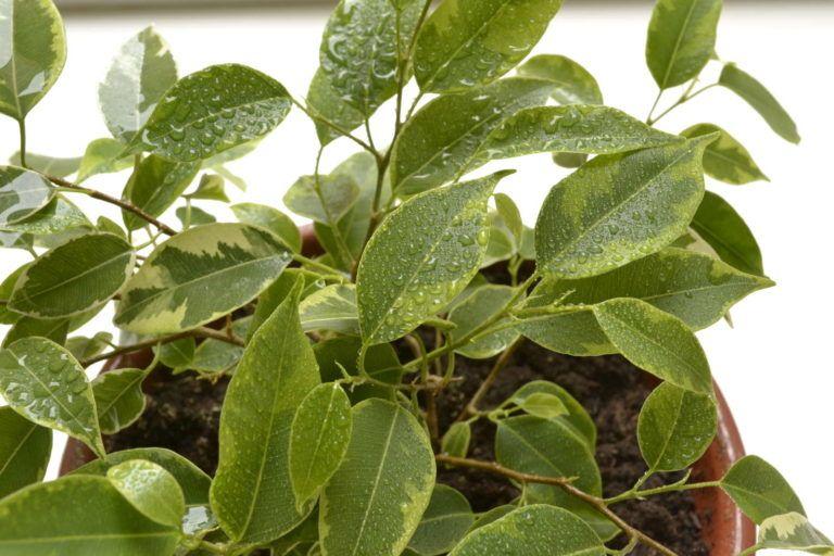 Ampelschirme Gunstig Online Kaufen Bestellen Pflanzen Pflanzenblatter Plastikblumen