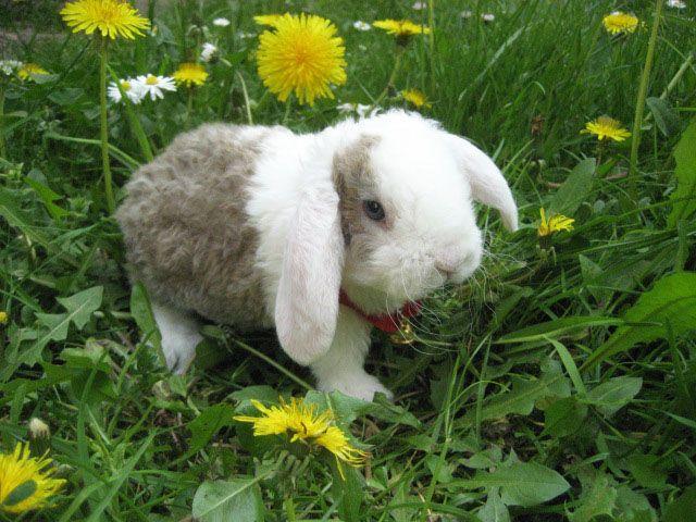 Rund ums Kaninchen (mit Bildern) Kaninchen, Süßer hase
