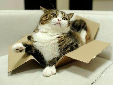 Katzen in Kartons...