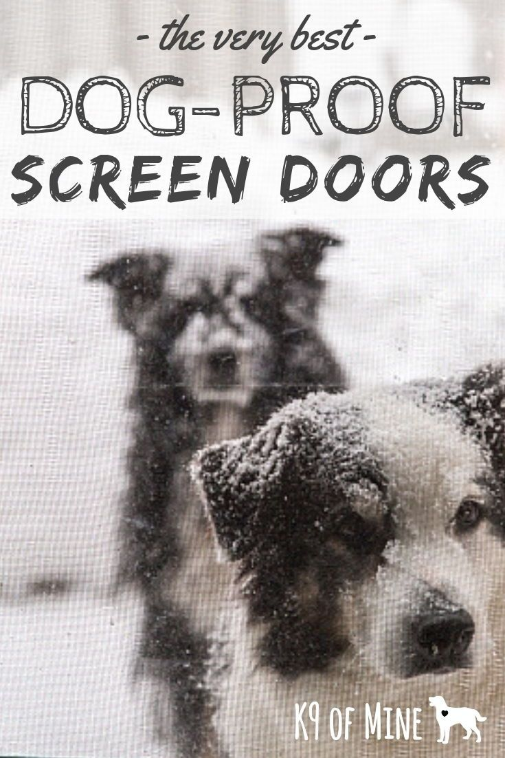 7 Best Dog Proof Screen Doors 2018 Update Dog Friendly Screens