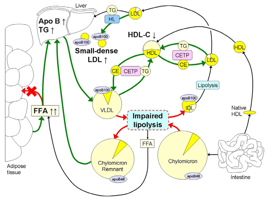 Dyslipidemia in Obesity Mechanisms and Potential Targets