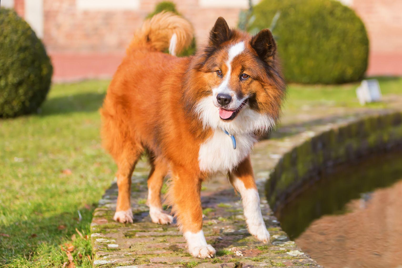 Pin Auf Det Behovs En Egen For Hundar