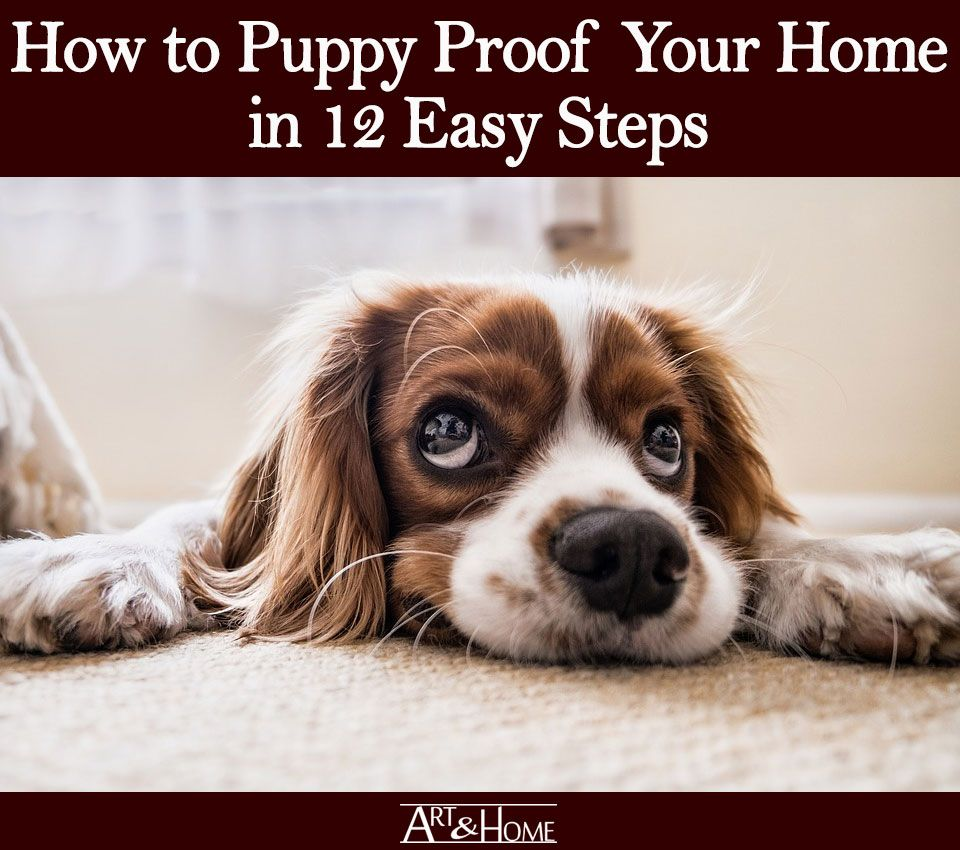 How to puppy proof your home in 12 easy steps fun facts